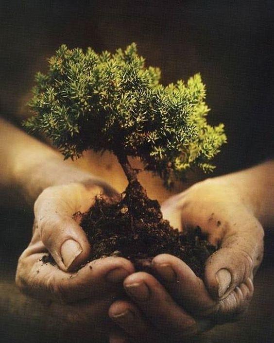 1. Ce este sustenabilitatea - Scurt istoric al conceptului